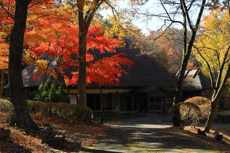 Autumn leaves of Satoyama, Kitaage City, Iwate Prefecture