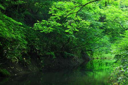 Fresh Green Falls, Hanamaki City, Iwate Prefecture