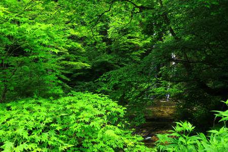 Summer Mountain Stream, Hanamaki City, Iwate Prefecture Zdjęcie Seryjne