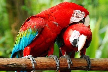 love macaw birds photo