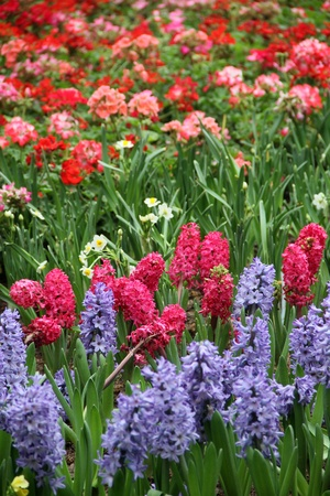 colorful flower bed background photo