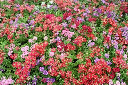virágágy: gyönyörű virágágyás háttér Stock fotó