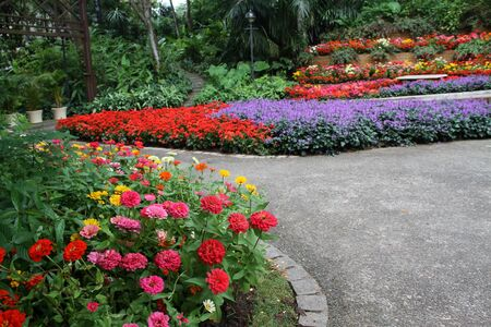 beautiful colourful flower garden photo