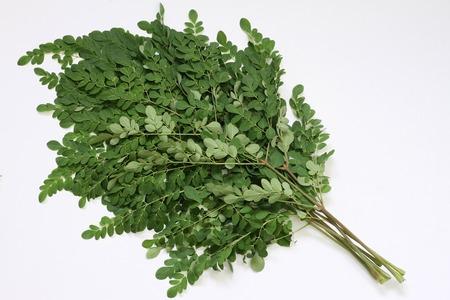 oleifera: Ramas de hojas de Moringa oleifera