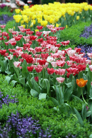 Colorful Flower Bed Background Stock Photo Picture And Royalty - Colorful flower garden background