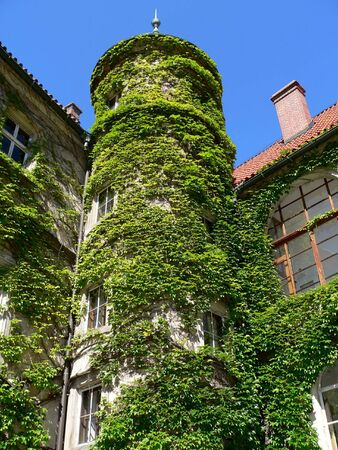 Overgrown historic tower  by green creeper Stock Photo