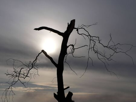 cloudless: Dead tree with cloudy background