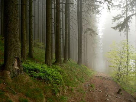 Turist path across misty forest. Stock Photo