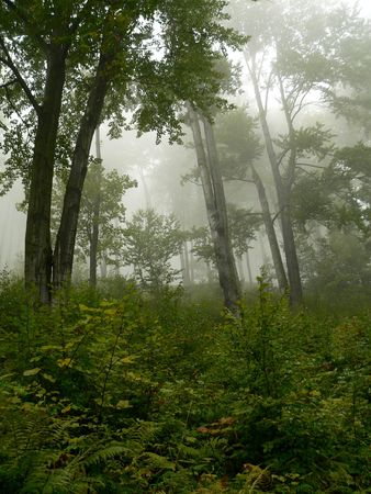 Depressive misty forest in autumn. Stock Photo - 4625034
