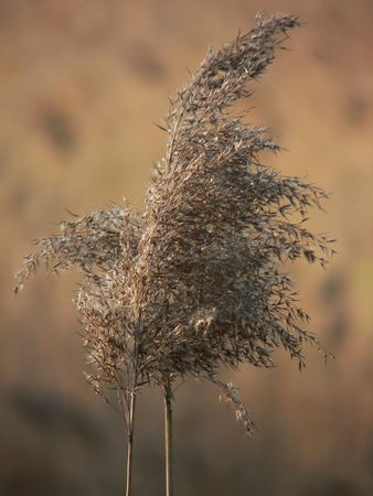 Abstract close-up of dry grass for backgrounds Stock Photo - 4797946