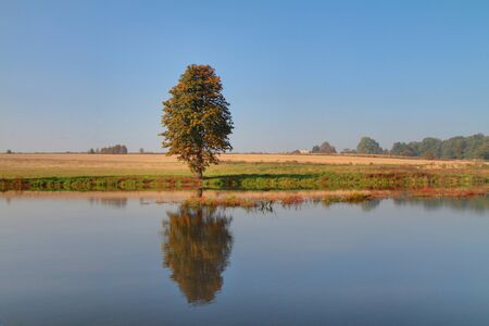 Lonely tree with reflection in lake - autumn. Stock Photo - 8040395