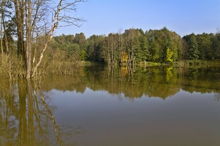 Pond with reflection in beautiful day of spring. Stock Photo - 9253907