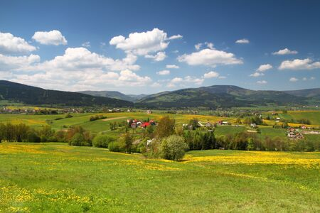 valley below: Beautiful spring landscape in valley below mountains - grass field with dandelions and cloudy sky.