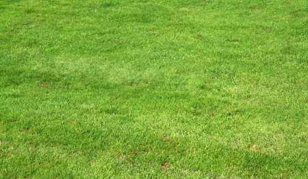 Image of natural green trimmed grass of soccer field  Stock Photo