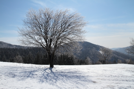 Winter day in mountain with lot of snow in spring  photo