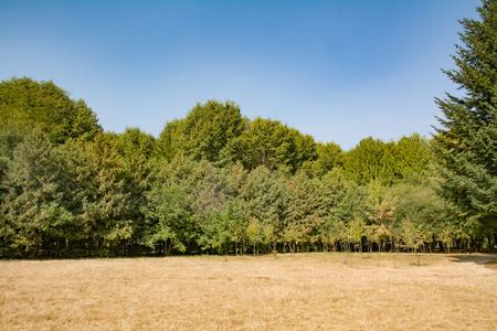 フィールドと青い空の木