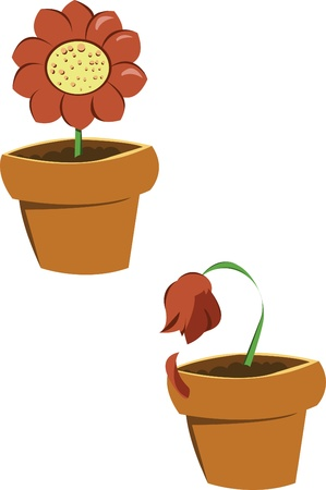 two flowers, the first one is a nice daisy, the second is wilted Illustration