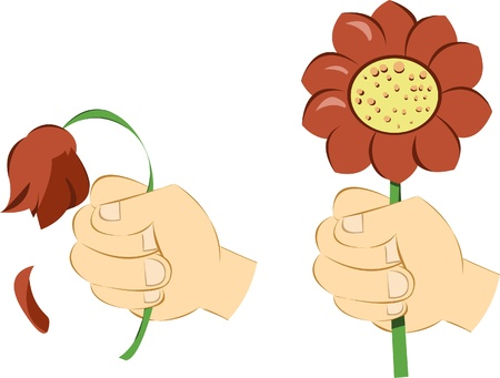 2 hands isolated on white, the first giving a wilted flower, the second one a nice daisy - each object is singly grouped