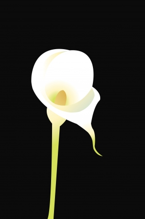 A vector cartoon representing a calla flower isolated on black Stock Vector - 15616481