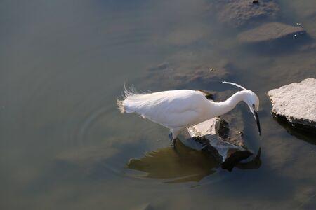 subsist: birds Stock Photo