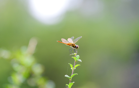 Dragonfly on the twigs in the In the morning, look beautiful Banco de Imagens - 106558813