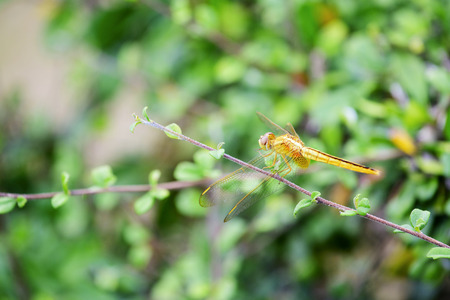 Dragonfly on the twigs in the In the morning, look beautiful