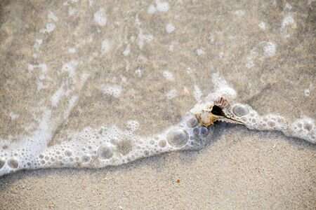 shell that is placed at the beach by the sea in the morning, see and feel the peace Banco de Imagens