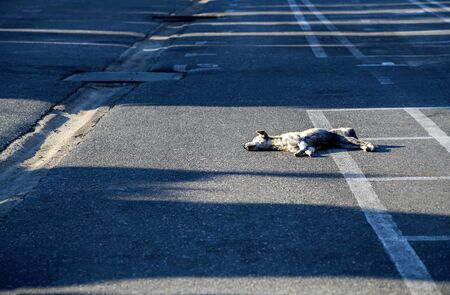 The dog sleeping on the road in the morning bright, ignoring do not do anything get lonely