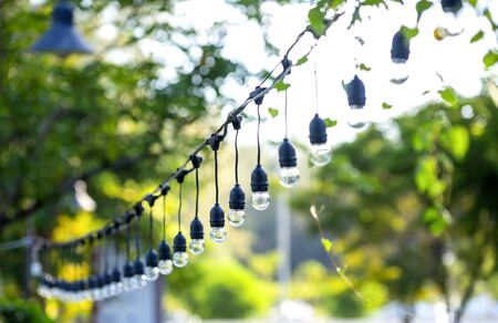 The bulbs are hung in long rows background nature of green tree look beautiful in the morning