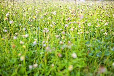 The small flowers bloom in the morning