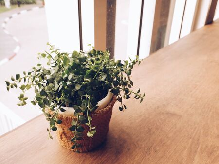 interior: Plant pot on wooden table