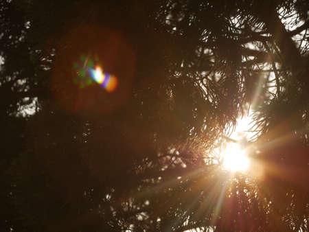 shiny: Sun shines through the woods Stock Photo