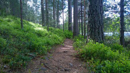 walk in: Walk in the wood