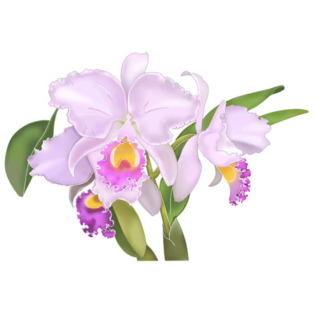 florid: Cattleya