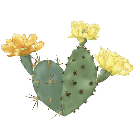 Heart-Cactus Illustration