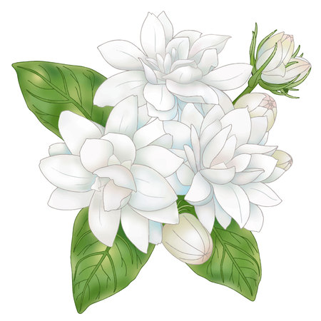 florid: Jasmine