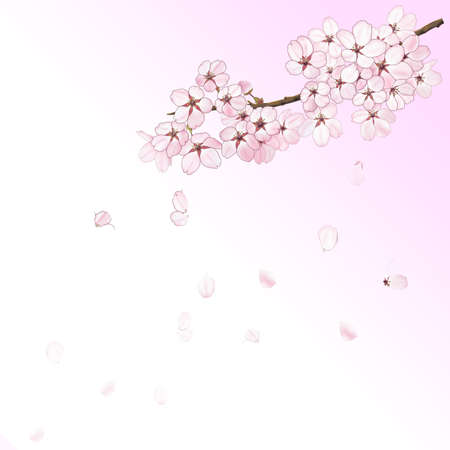 Sakura FLower with blue sky background illustraion 版權商用圖片