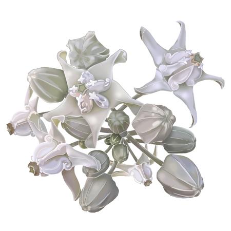 Crown flower illustration isolate on white vector Illustration