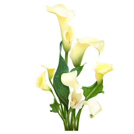 Lilly flower illustrations  isolate on white vector Illustration