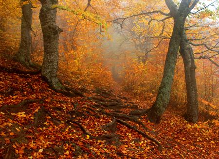 autumn forest after rain light fog