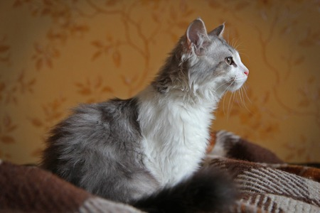 cat sitting in a room on the brooding plaid Stock Photo