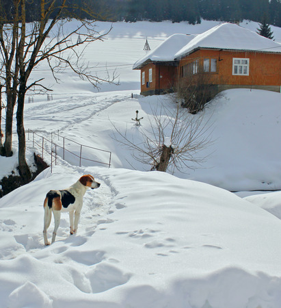 the dog is on the trail in the winter home
