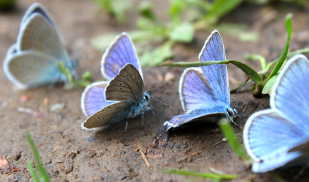 blue butterfly sitting on the ground diagonally Stock Photo