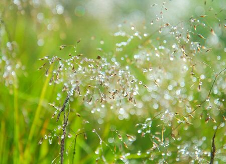 highlights the dew drops on a bright green grass Stock Photo