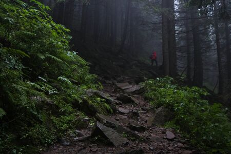 man walking on the stone path through the dark forest