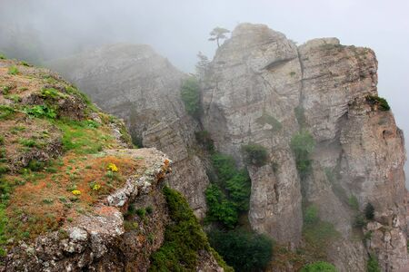 spring view of the cliffs with trees in thick fog