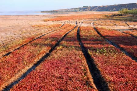 plain covered with plants along the estuary solyanka