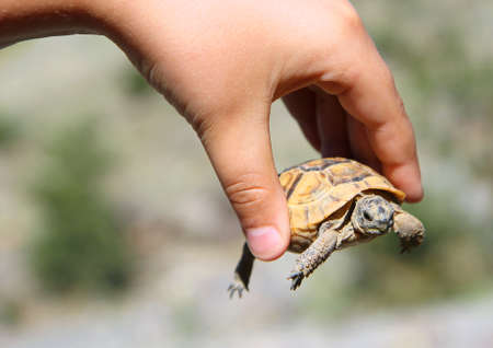 little turtle with yellow shell in hand large