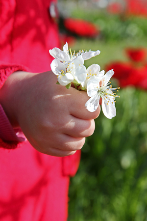 palms of the hands of the child holds a bouquet of flowers
