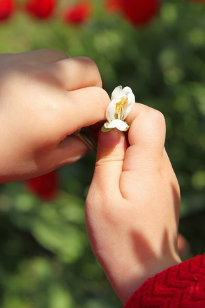 hands palm child holding a flower